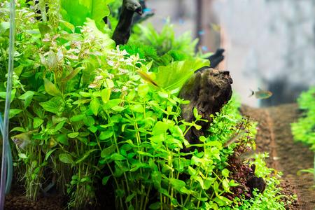 Beautiful aquarium Stock Photo - 26853929