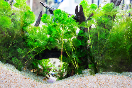 acquariofilia: Beuatiful aquarium