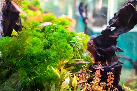 Beautiful aquarium Stock Photo - 26853934