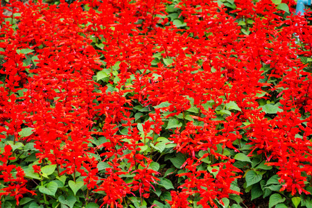 florae: Red flowers Stock Photo