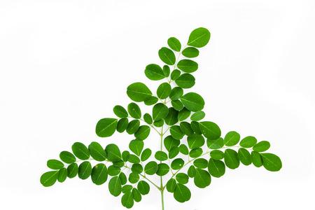 oleifera: Moringa oleifera leaves isolated on white background Stock Photo