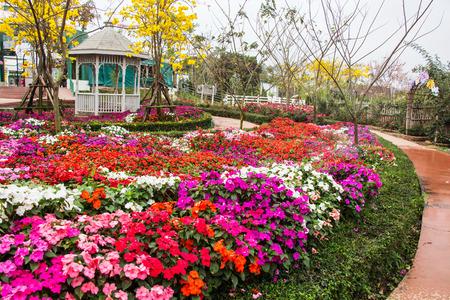 Impatiens flowers in garden
