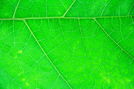 contrasty: green leaf texture