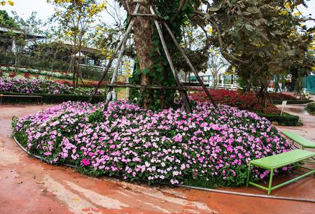 impatiens: Impatiens flores Foto de archivo