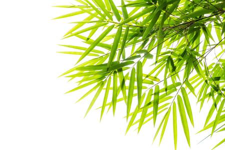 Bamboo leaf 写真素材