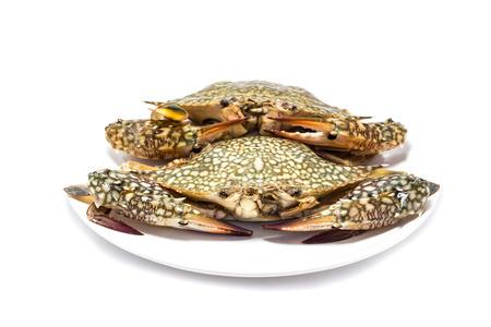 blue swimmer crab: Crab