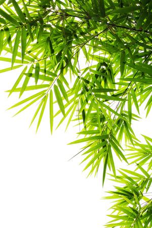 bamboo leaf: Bamboo leaf Stock Photo