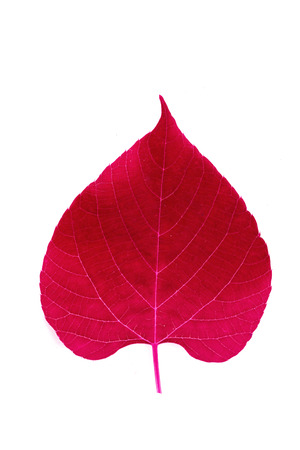Red heart leave on white