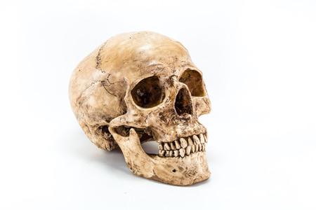 human jaw bone: Skull on white background Stock Photo