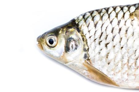 scardinius: Head fish