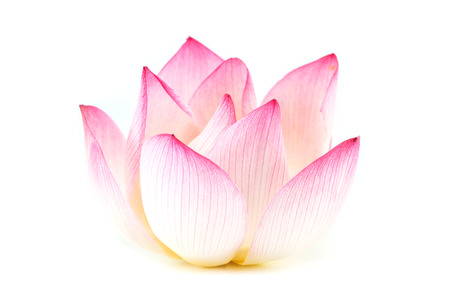 Lotus isolated on white background Standard-Bild