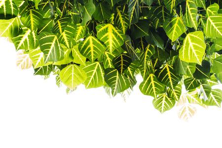 greem: Greem leaf background Stock Photo