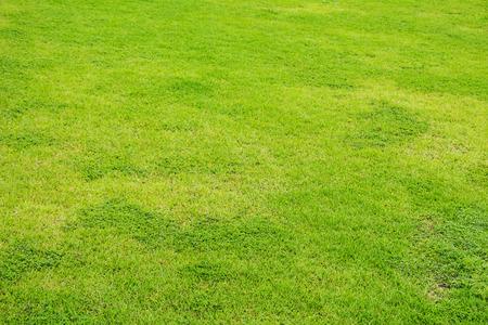 grass Фото со стока - 36371270