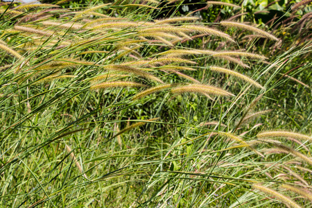 flower grass photo