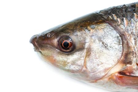 erythrophthalmus: head fish Stock Photo