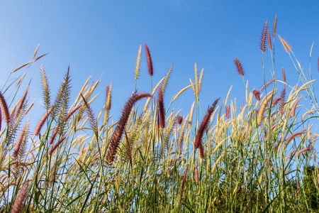 limp: Flowers grass Stock Photo