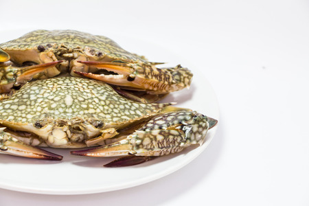 whitw: Crab isolated on whitw background