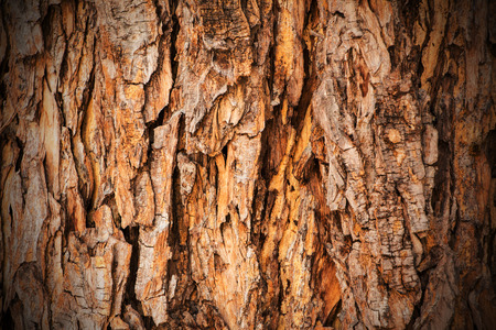 tree trunks: Bark texture