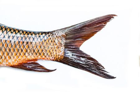 tail: fish tail