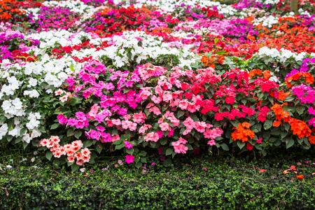 lizzie: Mix flowers