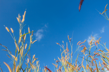 sward: Grass flowers on blue sky