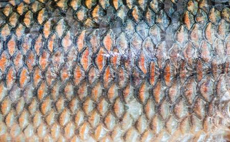 caudal fin: Fish scale