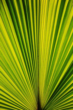 Green palm leaf on white background Фото со стока
