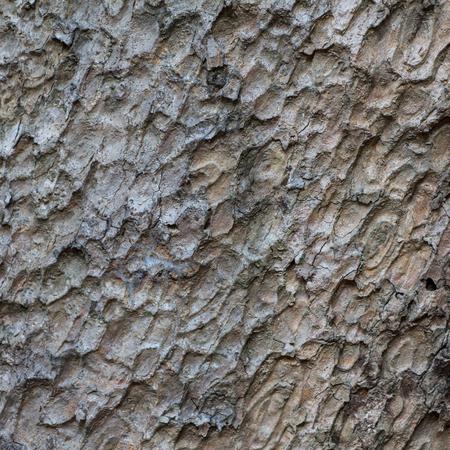 Bark tree texture Фото со стока