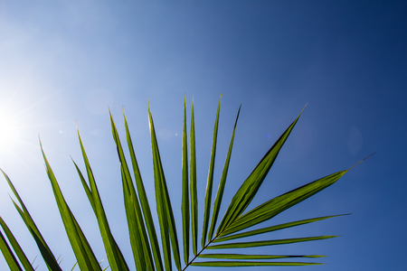 Palm leaf with blue sky
