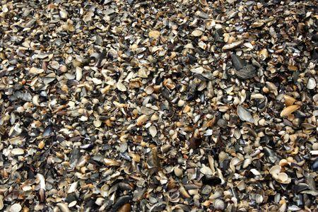 Wet seashells can be used like background