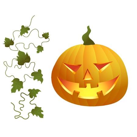 pumpkin with leaves illustration  Illustration