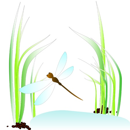 slew: Dragonfly above the moss  Illustration