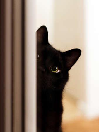 cute black cat peeking with one eye around the corner, photographed through the window glass