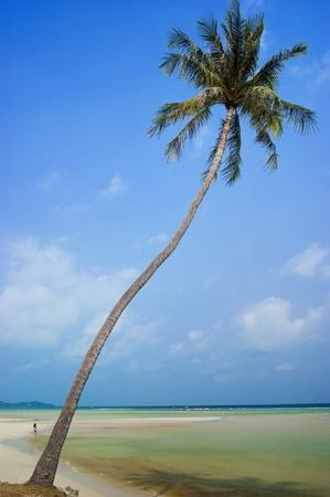 Coconut trees in the beautiful beach of Koh Samui Thailand photo