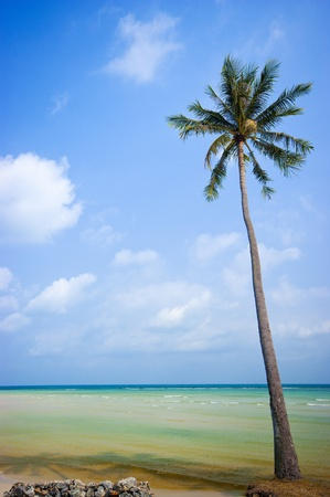 Coconut trees in the beautiful beach of Koh Samui Thailand Stock Photo