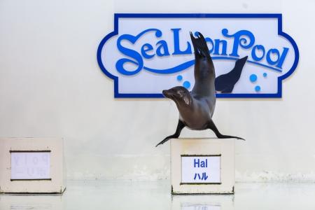 sea lion show at Noboribetsu Marine Park Hokkaido Japan