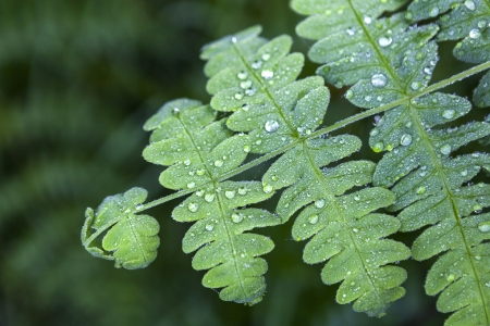 fresh green leaf with water drops Stock Photo - 20724738