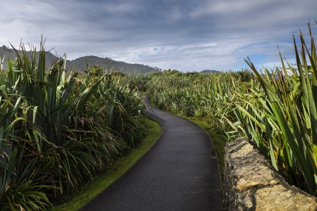 Boardwalk trail through lush coastal forest in Paparoa National Park, South Island, New Zealand Stock Photo