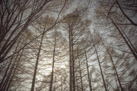vintage forest background photo