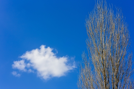 Dry tree and clouds in blue sky