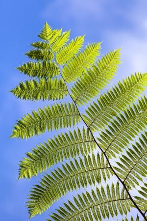 Tree ferns leaf in blue sky Stock Photo