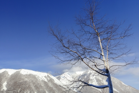 leafless tree in winter and blue sky photo