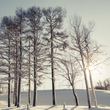 Winter scene of leafless trees in morning light photo