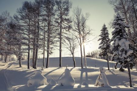 Winter scene of leafless trees in morning light photo