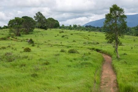 walking trail: Campo verde e percorso a piedi nel parco nazionale di Khao Yai, Thailandia Archivio Fotografico
