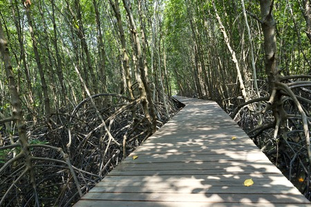 Boardwalk through the mangrove forest photo