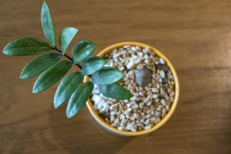 Top view plant in brown pot packed with gravel on wooden table