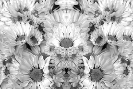 Reworked photo from Yellow Chrysanthemum flowers. Abstract black and white image
