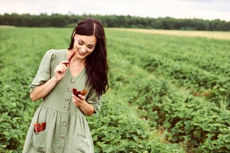 A young beautiful woman in a field harvesting strawberries with a green basket in her hands