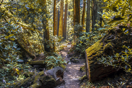 Nature Trail in Northern California photo